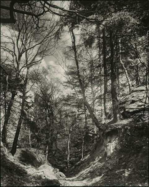 August Sander - Motiv im Mischwald
