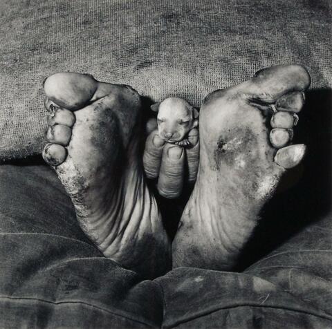 Roger Ballen - Puppy between feet