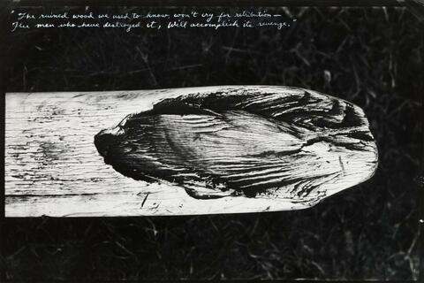 Peter Beard - From the original End-game
