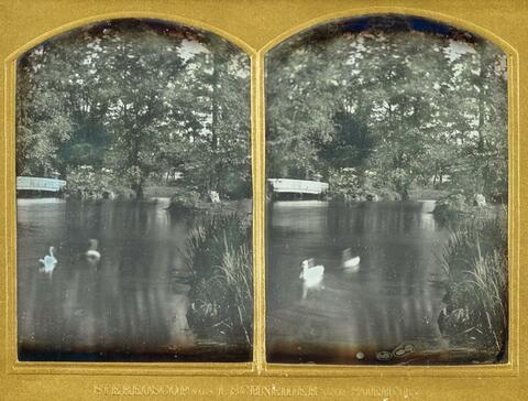 Wilhelm Schneider - Schwäne auf einem Teich