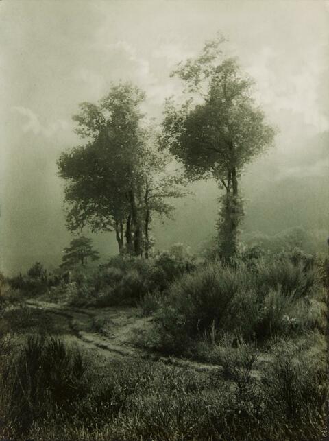 Léonard Misonne - Deux arbres en Campine
