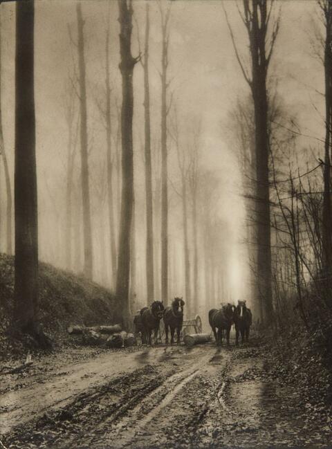 Léonard Misonne - Dans la forêt