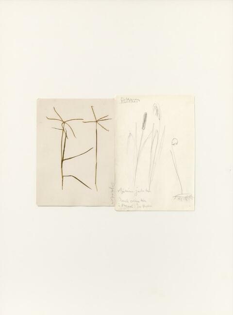 Joseph Beuys - Cynodon