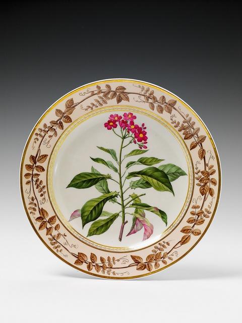 "Botanischer Teller ""Jatropha acuminata"" -"