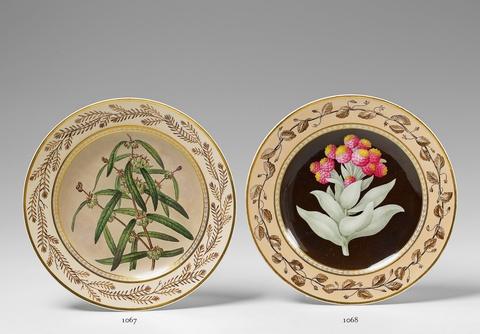 """Botanischer Teller """"Gnaphalium eximium"""" -"""