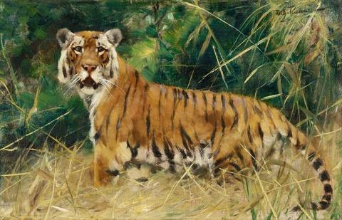 Wilhelm Kuhnert - Tiger