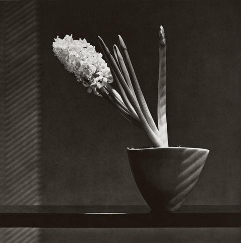 Robert Mapplethorpe - Hyacinth