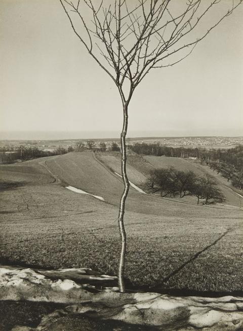 Albert Renger-Patzsch - Das Bäumchen (The Little Tree)