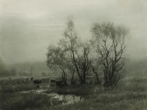 Léonard Misonne - Dans le marais