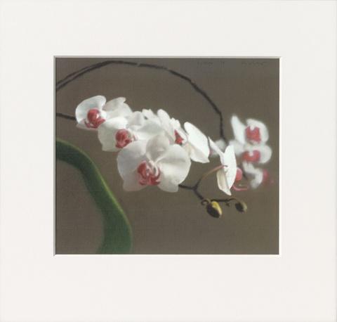 Gerhard Richter - Orchidee VI