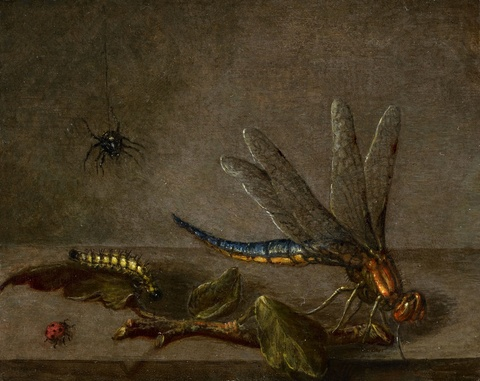 Netherlandish School, 17th century - Still Life with Insects
