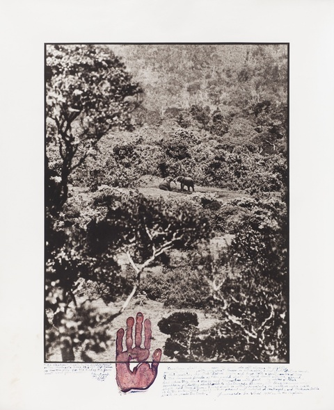 Peter Beard - Elephant tussle in the Aberdare Forest (aus der Serie: The End of the Game/Last Word from Paradise)