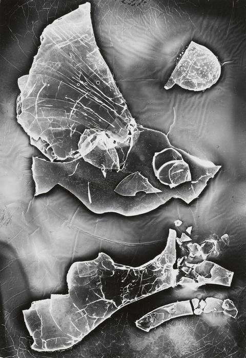 Heinz Hajek-Halke - Diluviales Aquarium