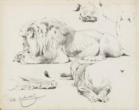 Two Studies of Recumbent Lions -