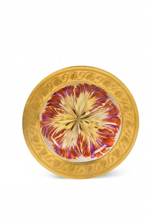 Tiefer Teller mit offener Tulpenblüte -