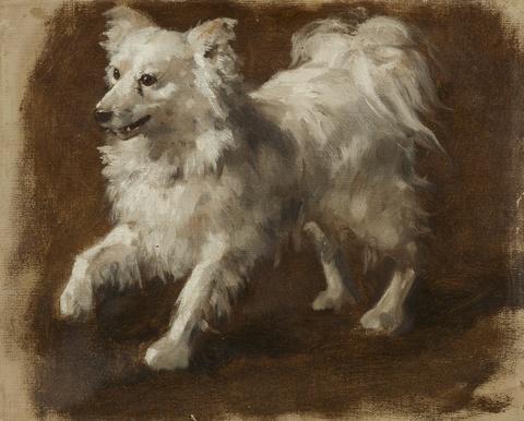 Deutscher Künstler des 19. Jahrhunderts - Ölstudie eines Hundes (Spitz)