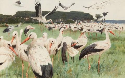 Wilhelm Kuhnert - White Storks