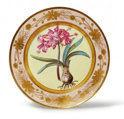 """Botanischer Teller """"Amaryllis farniensis"""" -"""