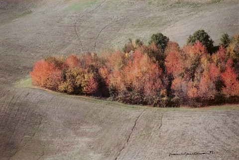Franco Fontana - Untitled