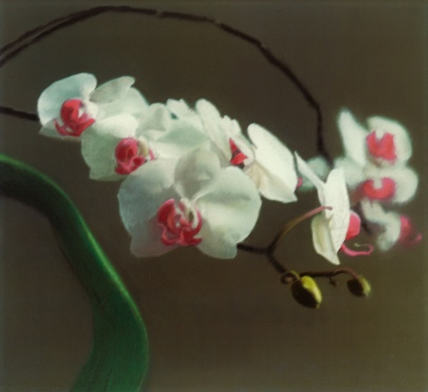 Gerhard Richter - Orchidee I