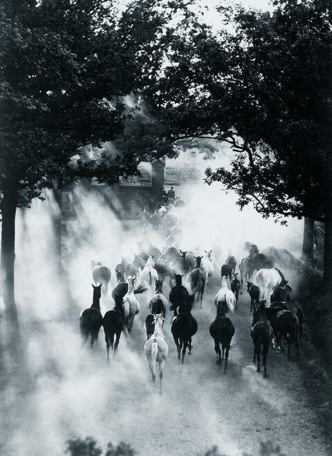Hein Gorny - Pferde