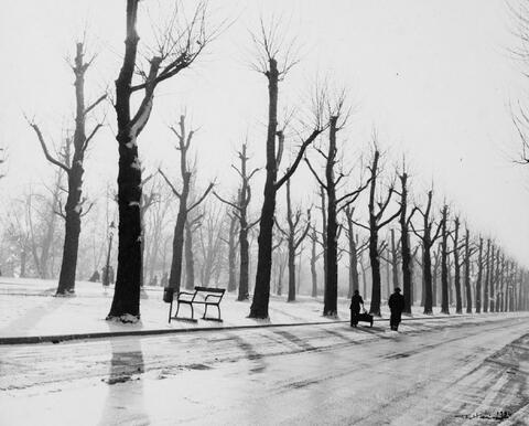 Robert Häusser - Allee im Winter