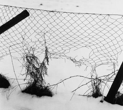 Peter Keetman - Ohne Titel (Drahtzaun im Schnee)