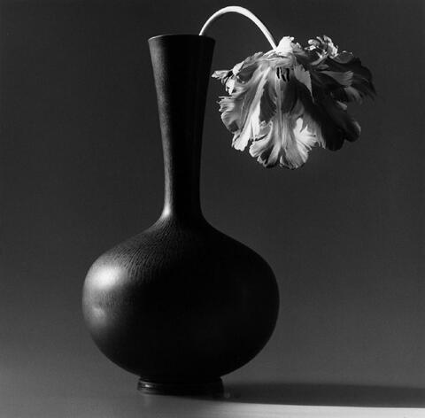 Robert Mapplethorpe - Papagei-Tulpe in schwarzer Vase
