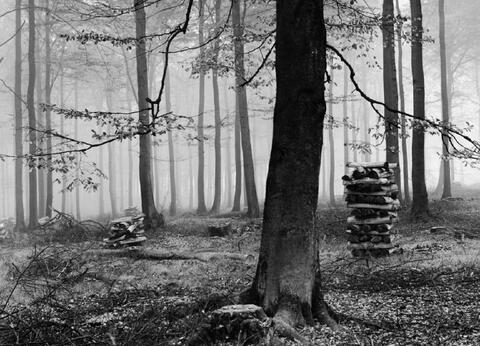 Albert Renger-Patzsch - Buchenwald im Herbst