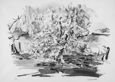 Oskar Kokoschka - Blühender Apfelbaum