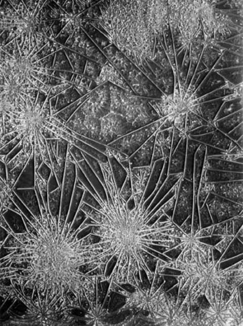 August Kreyenkamp - Mikrophotographie
