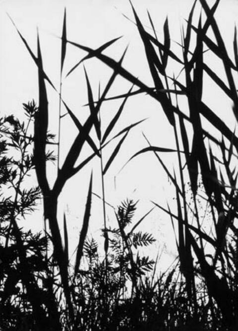 Lotte Laska - Schöne Gräser