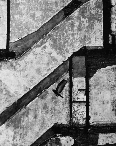 André Kertész - Landing Pigeon