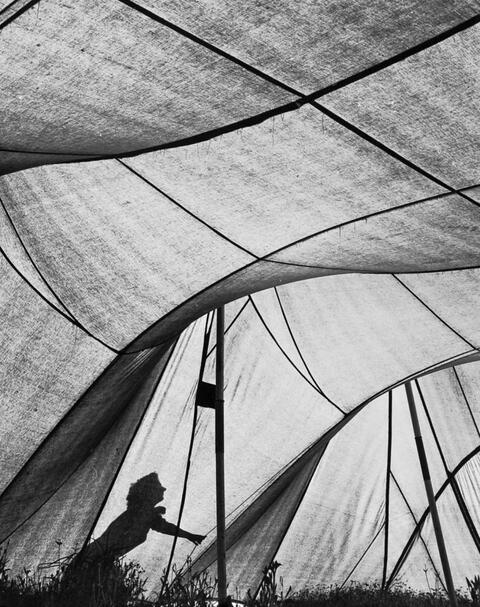 Ludwig Windstosser - UNTITLED (WOMAN WITH SAIL)