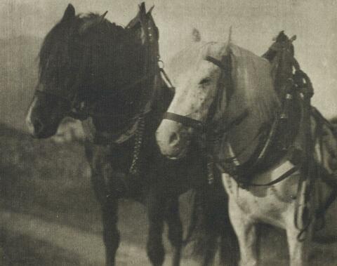 Alfred Stieglitz - HORSES