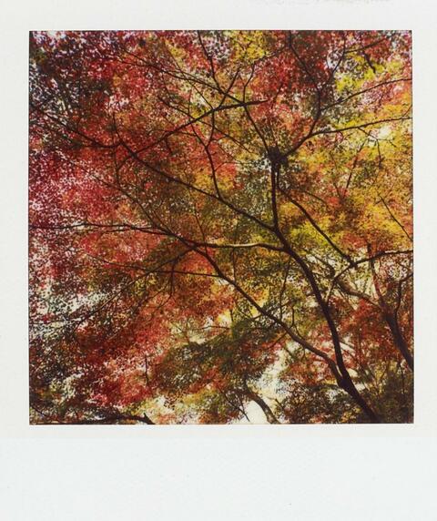 Nobuyoshi Araki - OHNE TITEL (AUS DER SERIE: POLANOGRAPHS)