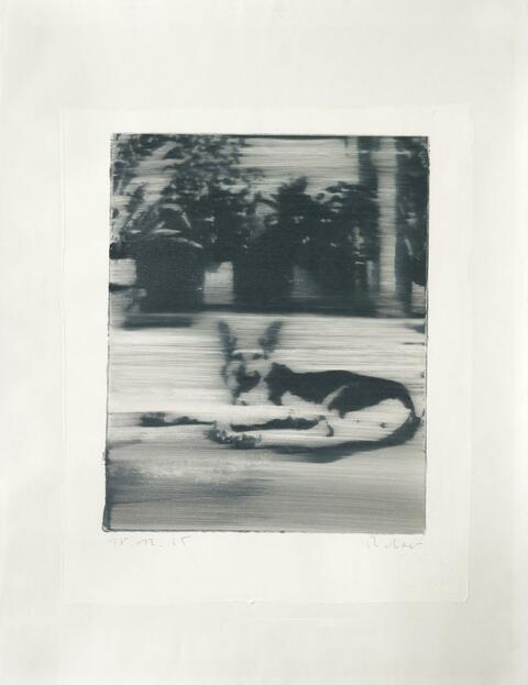 Gerhard Richter - Hund (dog)