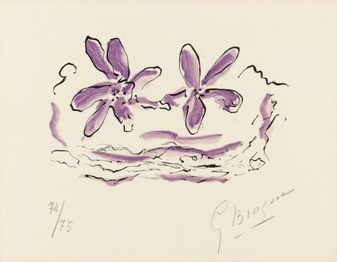 Georges Braque - Deux fleurs violettes