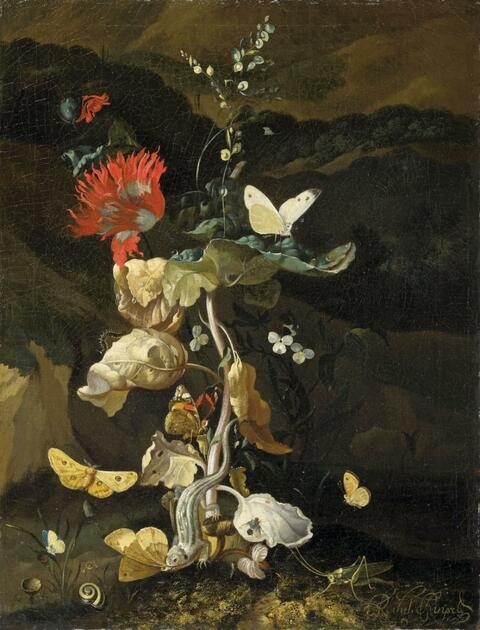 Netherlandish School, 17th century - STILL LIFE WITH PLANT AND INSECTS